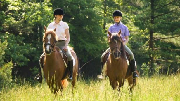 family w horse