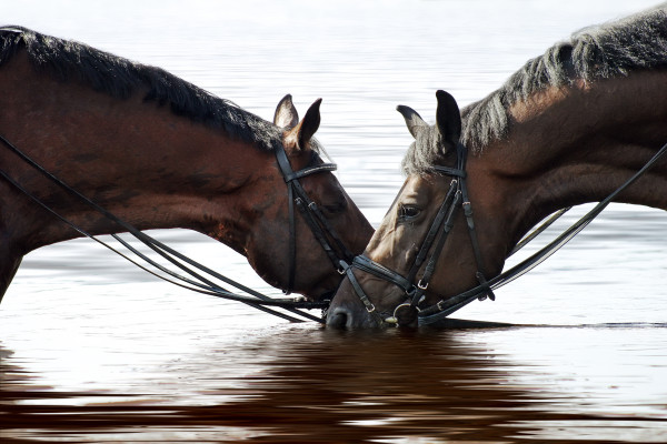 horses drink 2