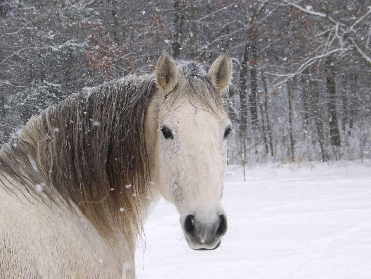 5166-horses-cute-horse