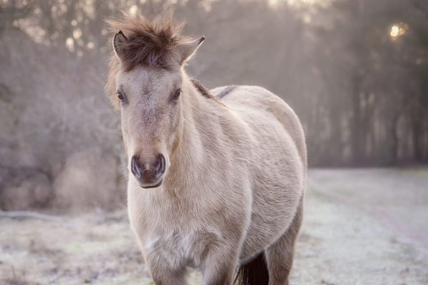 Pale-Horse-on-a-Cold-Winter-Morning-600x400